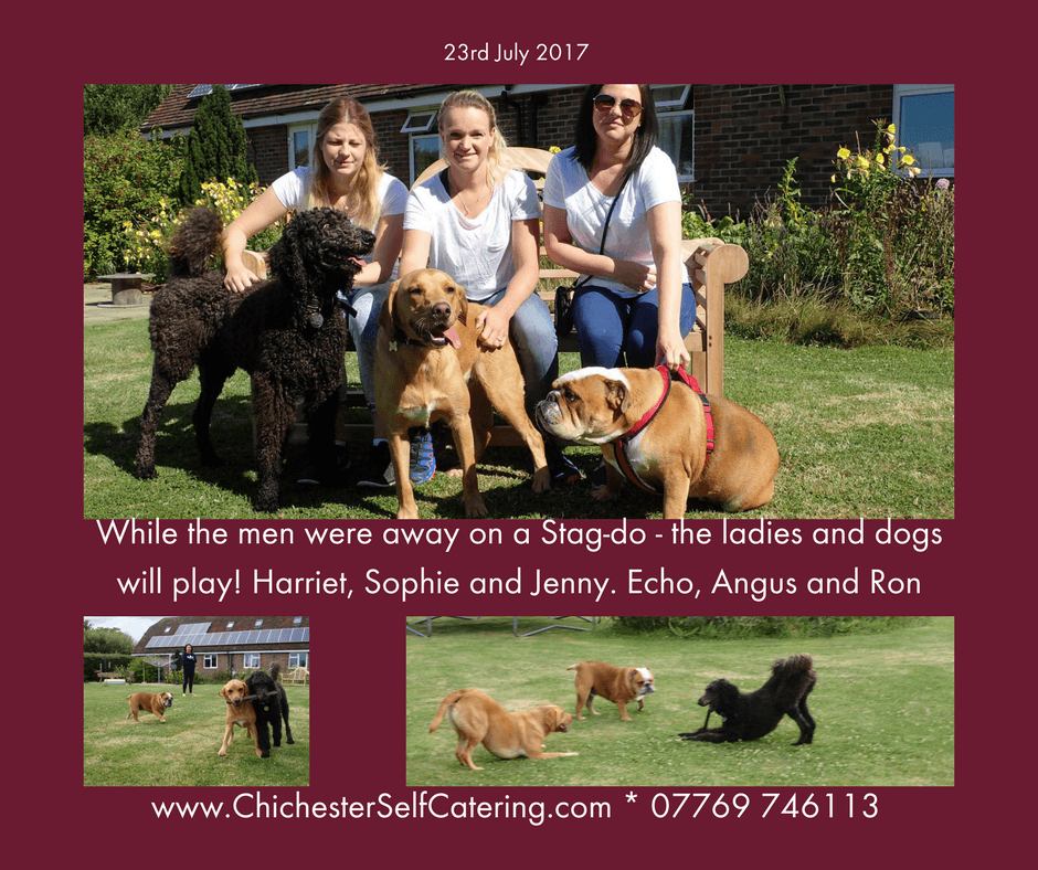 While the men were away on a Stag-do - the ladies and dogs will play!