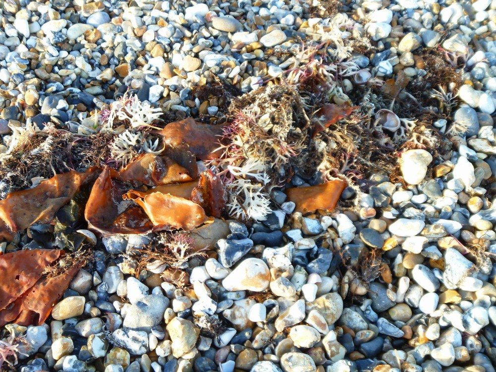 diagonal seaweed.1000px