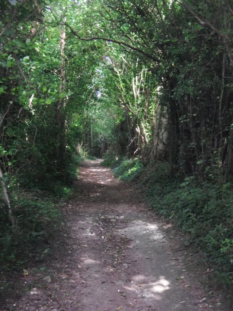 kingley-vale-treeavenue
